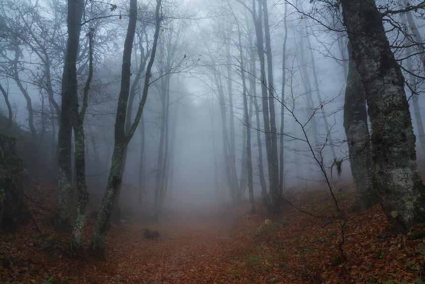 fog and fall trees